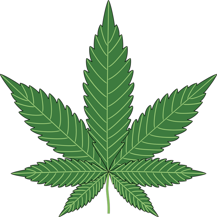 Regulatory view on the use of CBD and other cannabis